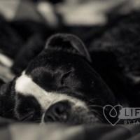 Pet Photography Tips: Use Natural Light