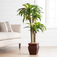 Great Cubicle Plants - Ponytail Plant In Bonsai Pot ...