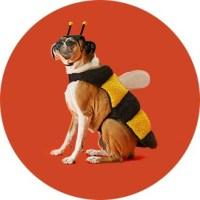 Pet Halloween Costumes : Target