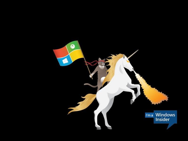 windows-insider-ninjacat-100597598-orig
