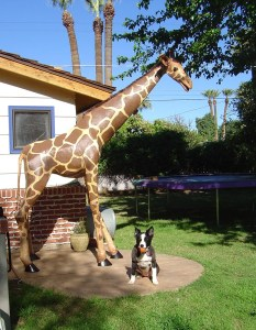3-D Giraffe with Dog
