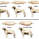 Η παχυσαρκία των σκύλων