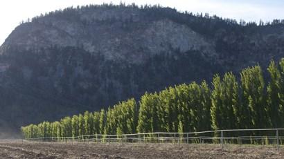 covert wind break, tastingroomconfidential.com/covert-farms-overt-abundance