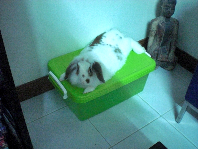 How Much Does Keeping a House Rabbit in Thailand Cost Every Month