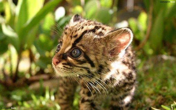 Hawaii Desktop Wallpaper Hd B 233 B 233 Ocelot