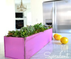 diy succulent planter orchid at tatertots and jello