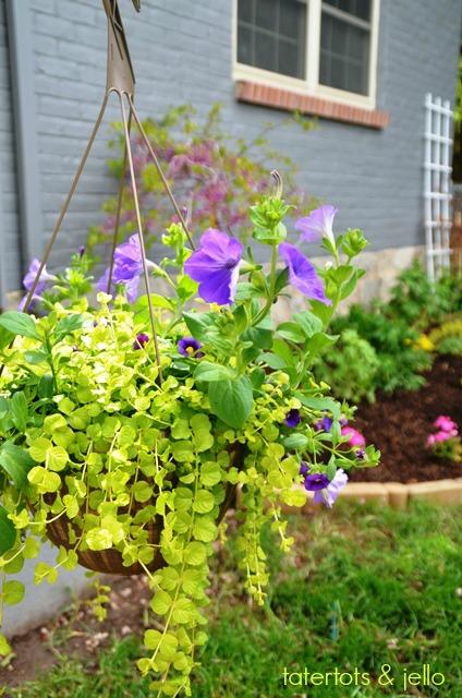 hanging.planter