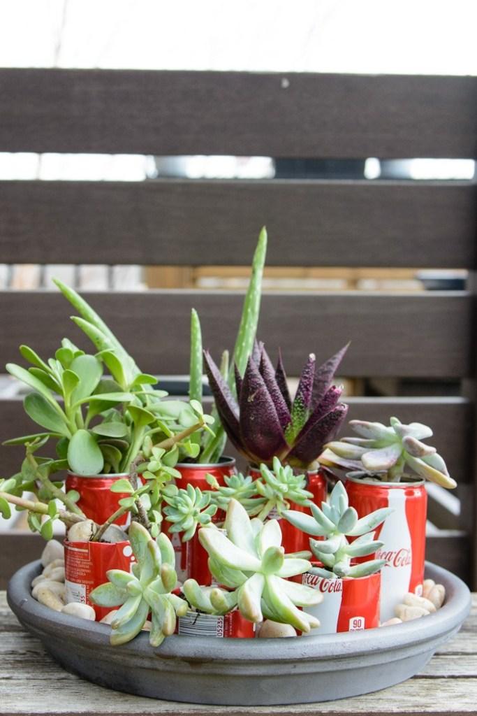 coke-can-succulent-garden-30-700x1050