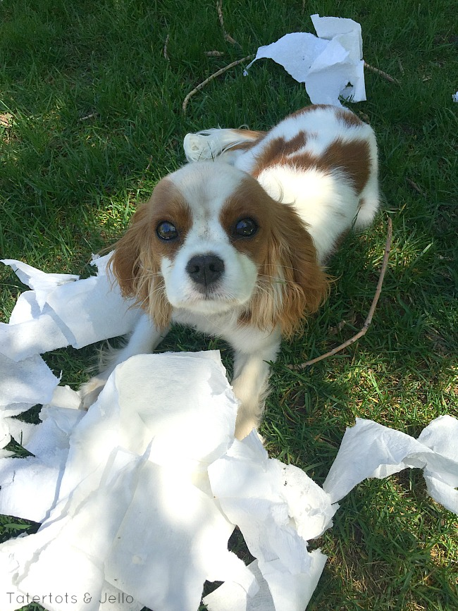 Tips On How To Keep Your House Clean With A Dog