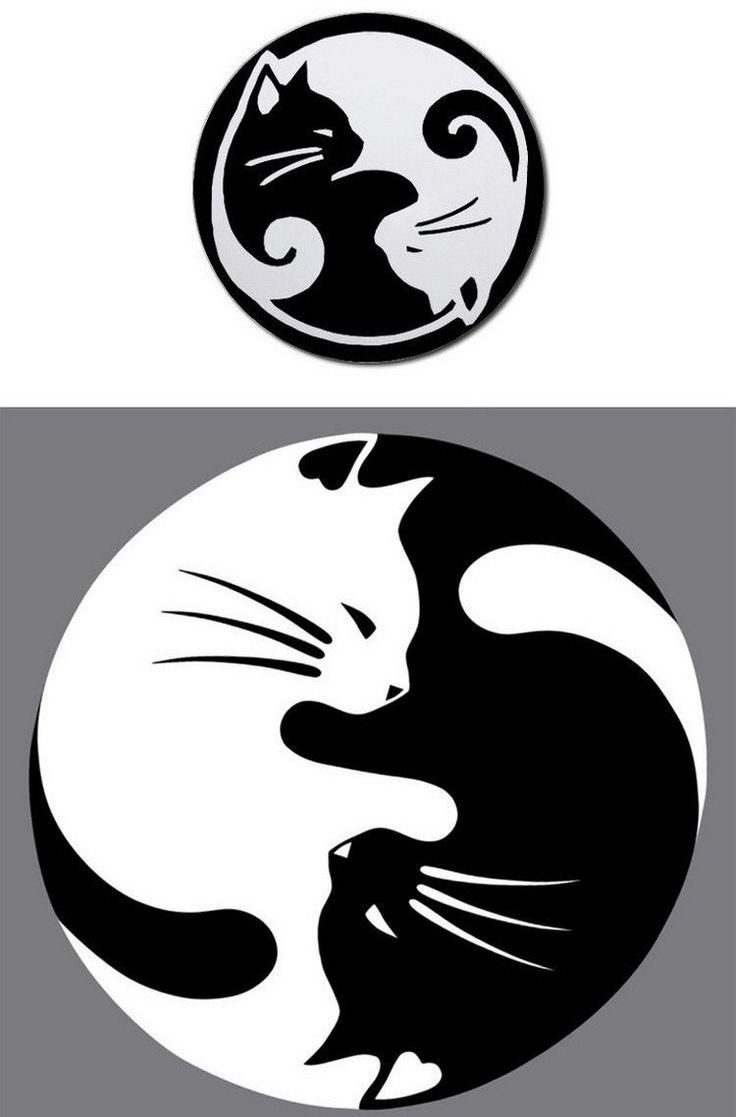 Photo Design Noir Et Blanc Geometric Tattoo Tatouage Chat Modèle De Symbole Yin Yang