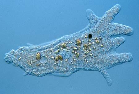 animal like protists - Onwebioinnovate