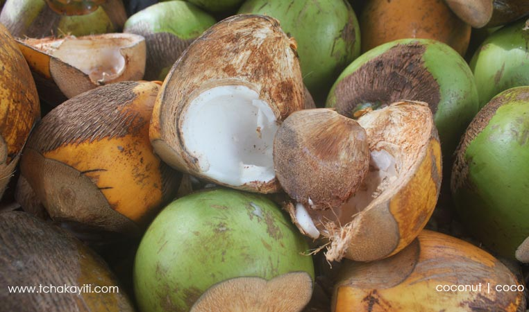 coconut-haiti-coco