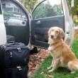 犬 車 ドライブ 注意点 おすすめ