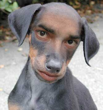 Edad humana de un perro