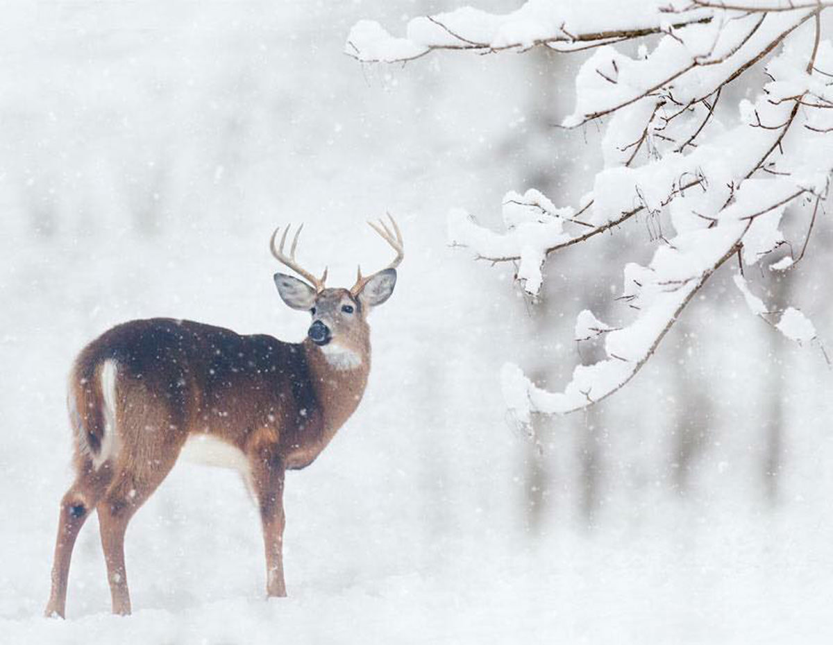 Cute Brown Wallpaper Cold Photography A Selection Of Images From Our