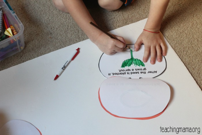 Pumpkin Life Cycle Booklet (Free Printable) - Teaching Mama