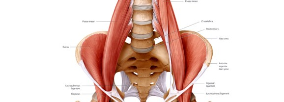 All About the Psoas Major:  Tips from a physical therapist & yoga instructor