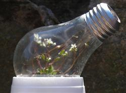 Recycled light bulb greenhouse