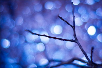 Bokeh Twig with Water Droplet
