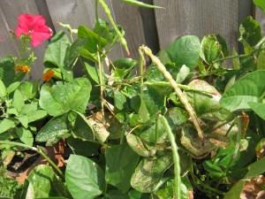 Food Fun Friday: Gardening Surprises