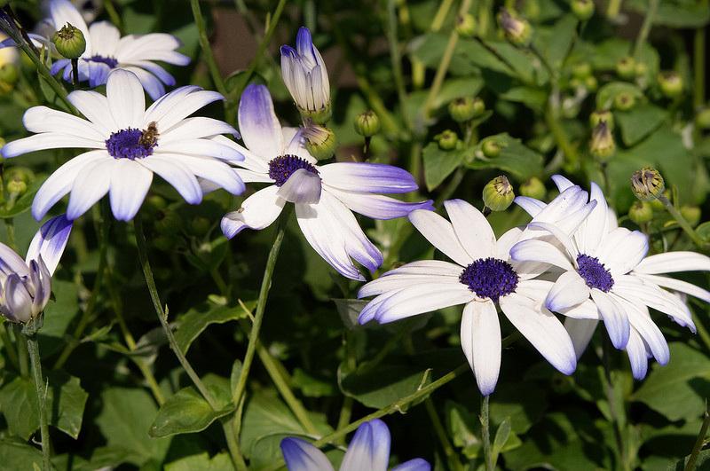 Flowers - Aalijah Patterson Website