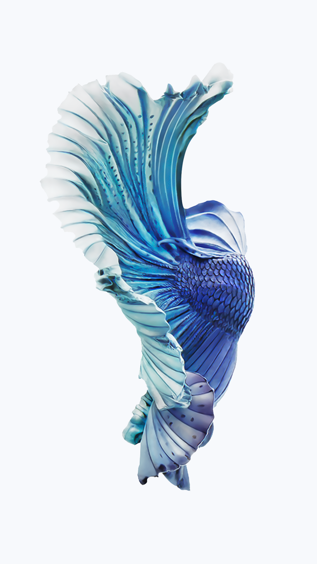 apple betta fish live wallpaper