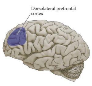 empati på hjerneniveau