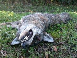 Obamas's dead dog