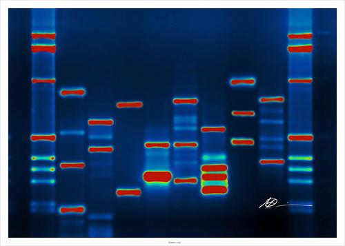 DNA by Micah Baldwin