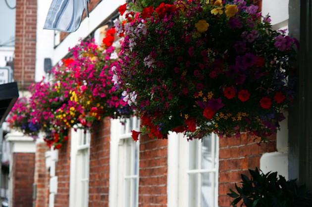 Flowers in Tewkesbury