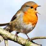 Tim Birkhead: The early birdwatchers