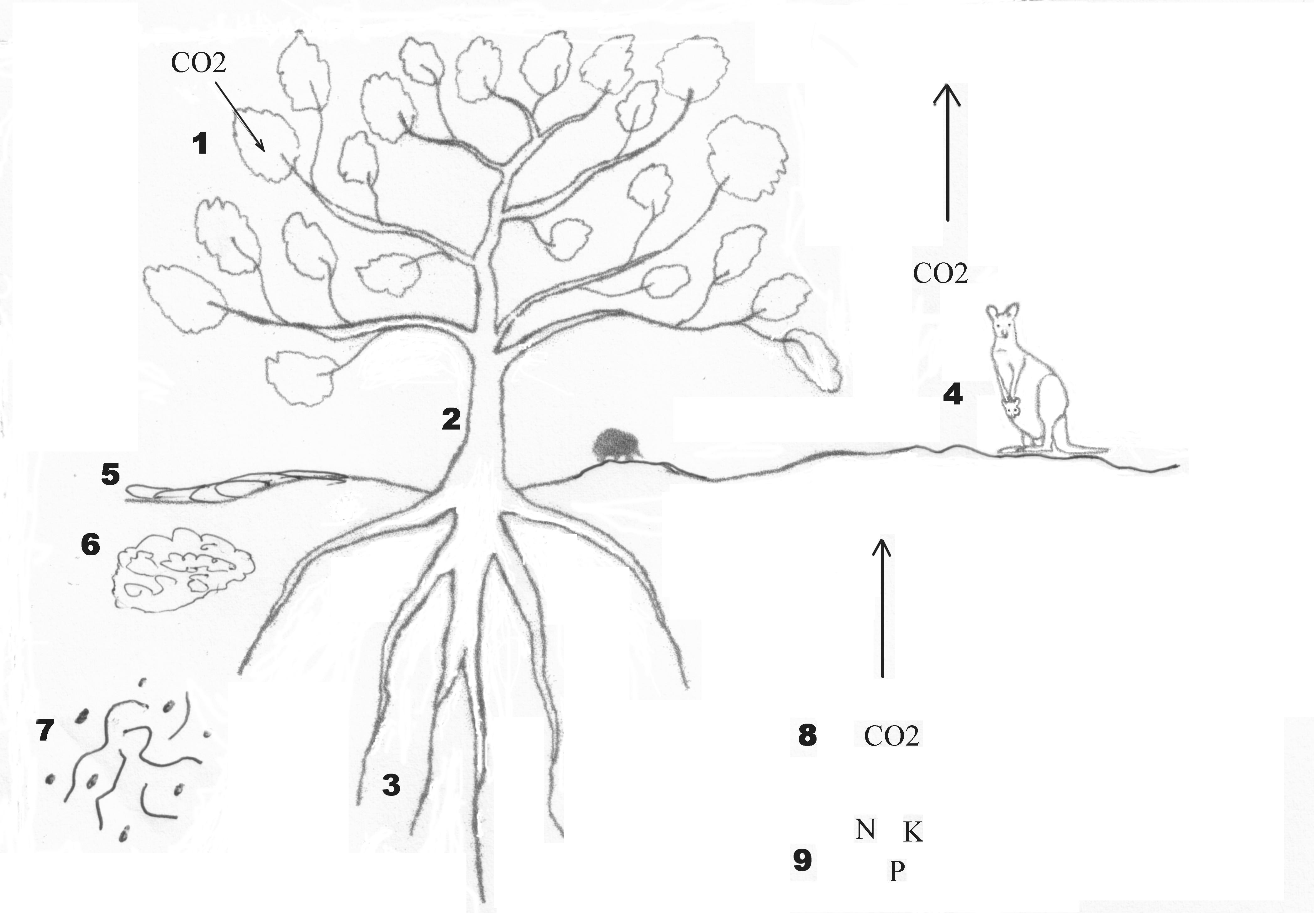 carbon sink diagrams