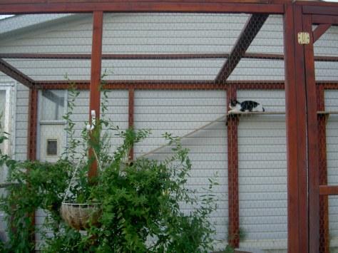 Colby-cat pen-september(2)