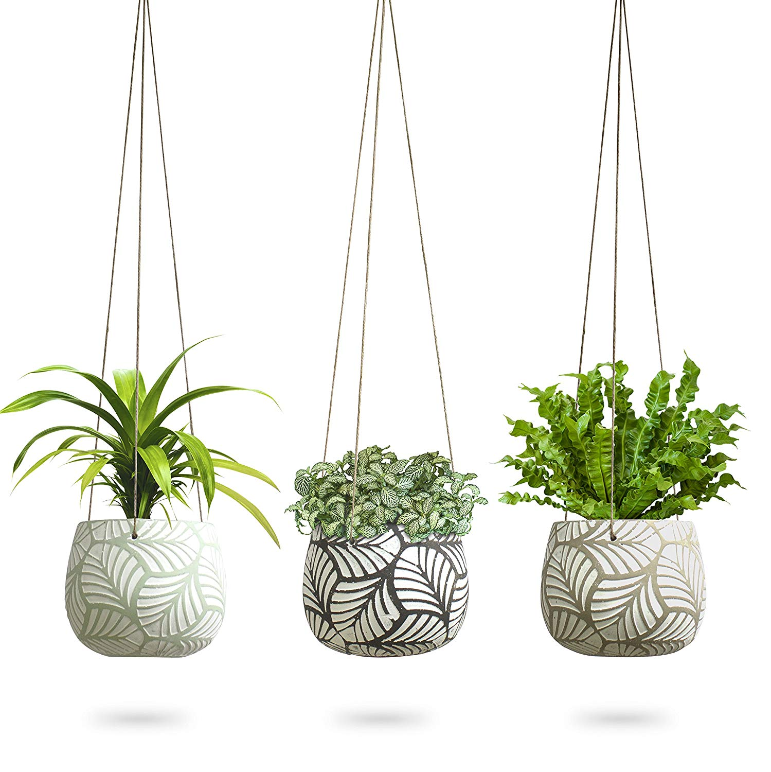 Where To Buy Indoor Plants Online 3 Pack Hanging Planter For Indoor Plants Teeny Tiny Terra