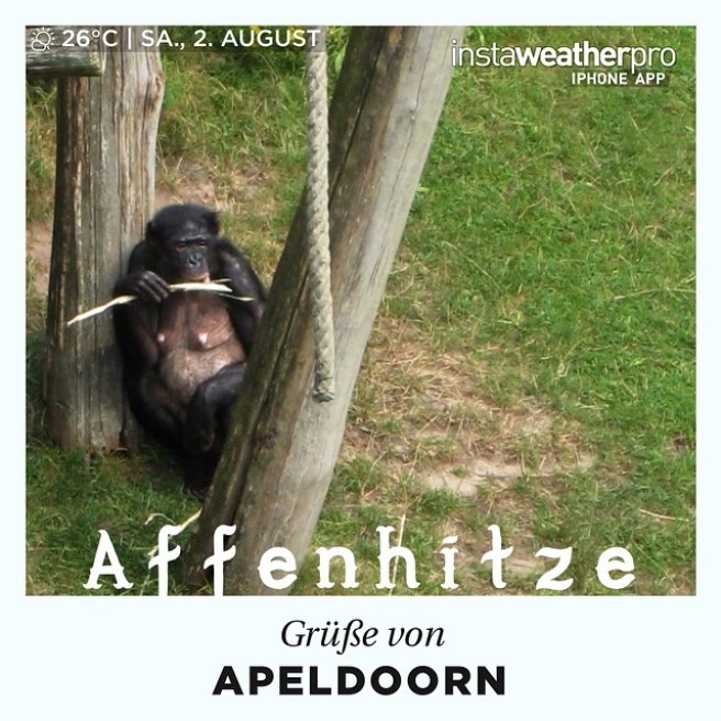 apenheul_apeldoorn_gelderland2