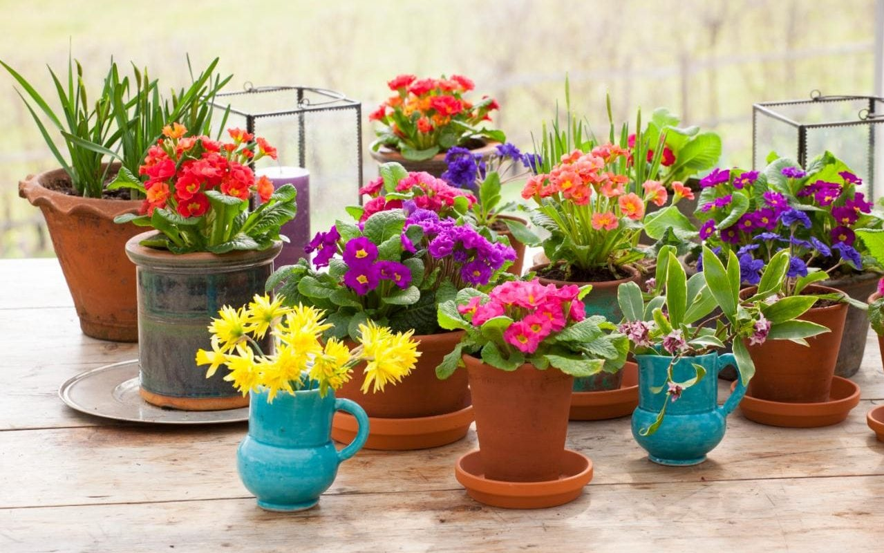 Blumentopf Shop Perfect Pots For Houseplants | The Telegraph