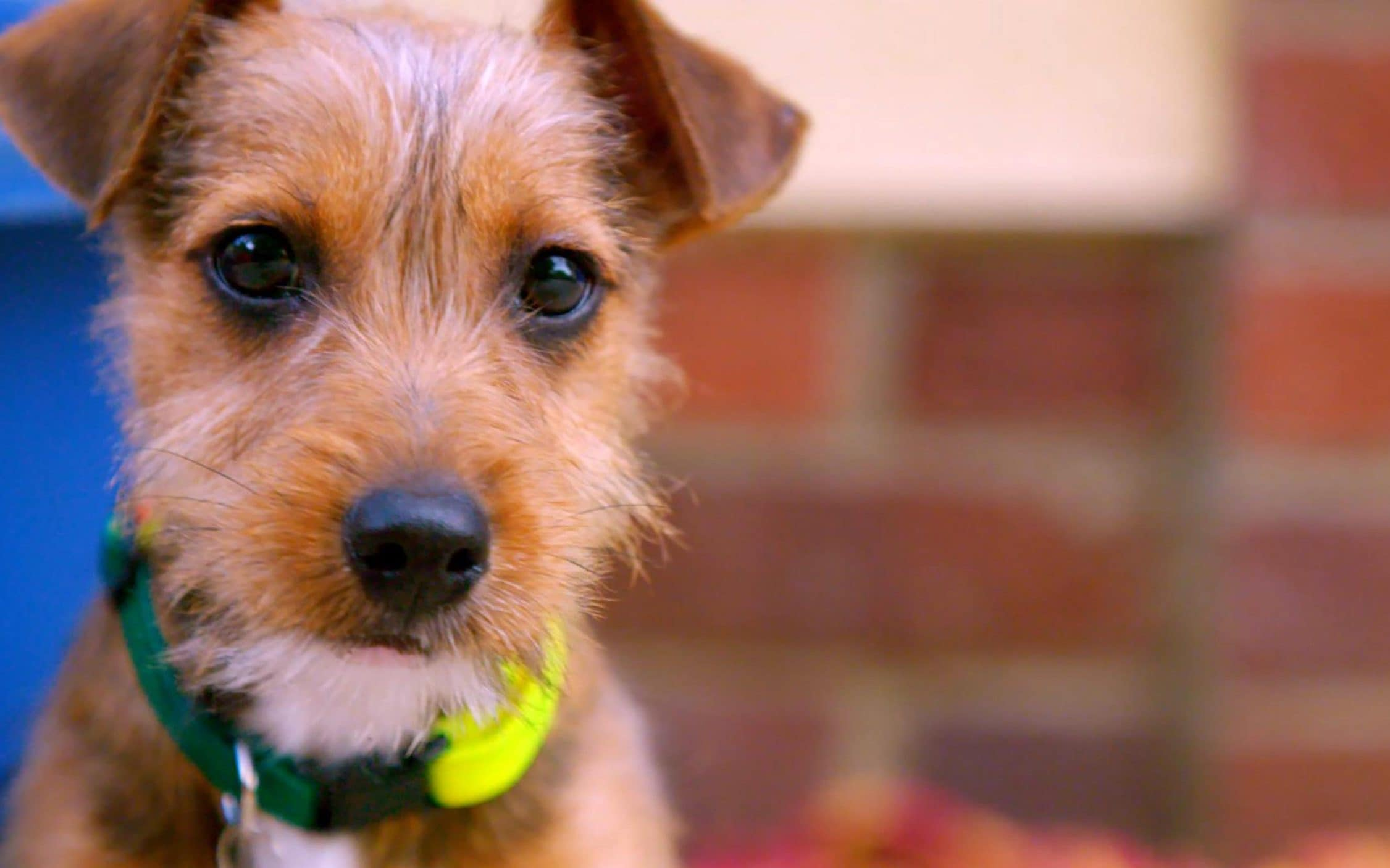 These Dogs Save People S Lives Inside The Dog House The Most Charming And Emotional Show On Tv