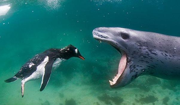 Cute Orca Wallpaper Mick Rooney Calls Out Bertelsmann On Possible Penguin