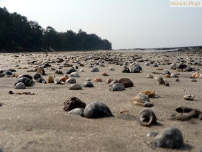 Manori Beach, Mumbai