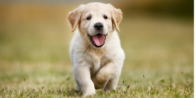 dogs, reasons to adopt a dog, pets, pet talk, puppies, our take, too much time on hand, animals, adoption,