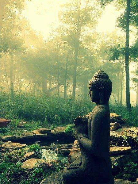 buddha , buddha at peace , natural buddha, buddhism