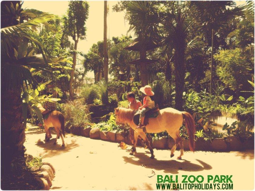 Naik-Kuda-Poni-di-Bali-zoo