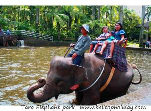 taro-elephant-park
