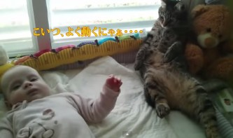 Confused cat not sure how to handle baby   YouTube