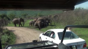 Fun in Hluhluwe Umfolozi mud bath with starring role for baby elephant   YouTube