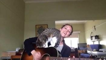 弾き語りで歌おうとすると、どうしても邪魔してくる猫が甘えん坊で可愛い