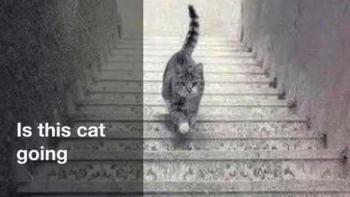 この猫は階段を登ってる?降ってる?どっちに見えますか?