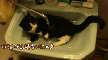 水浴びする猫が思った以上にくつろいでる!∑(゚Д゚)