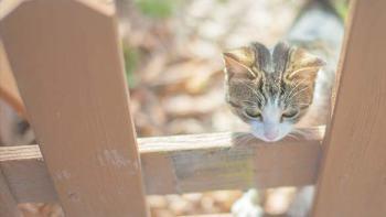 猫にまつわる名言やことわざが素敵!