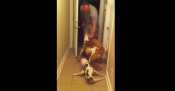 Airman comes home to handicapped dog from 6 month deployment    YouTube